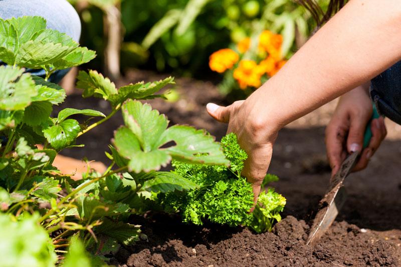 Gartenpflege im Mai