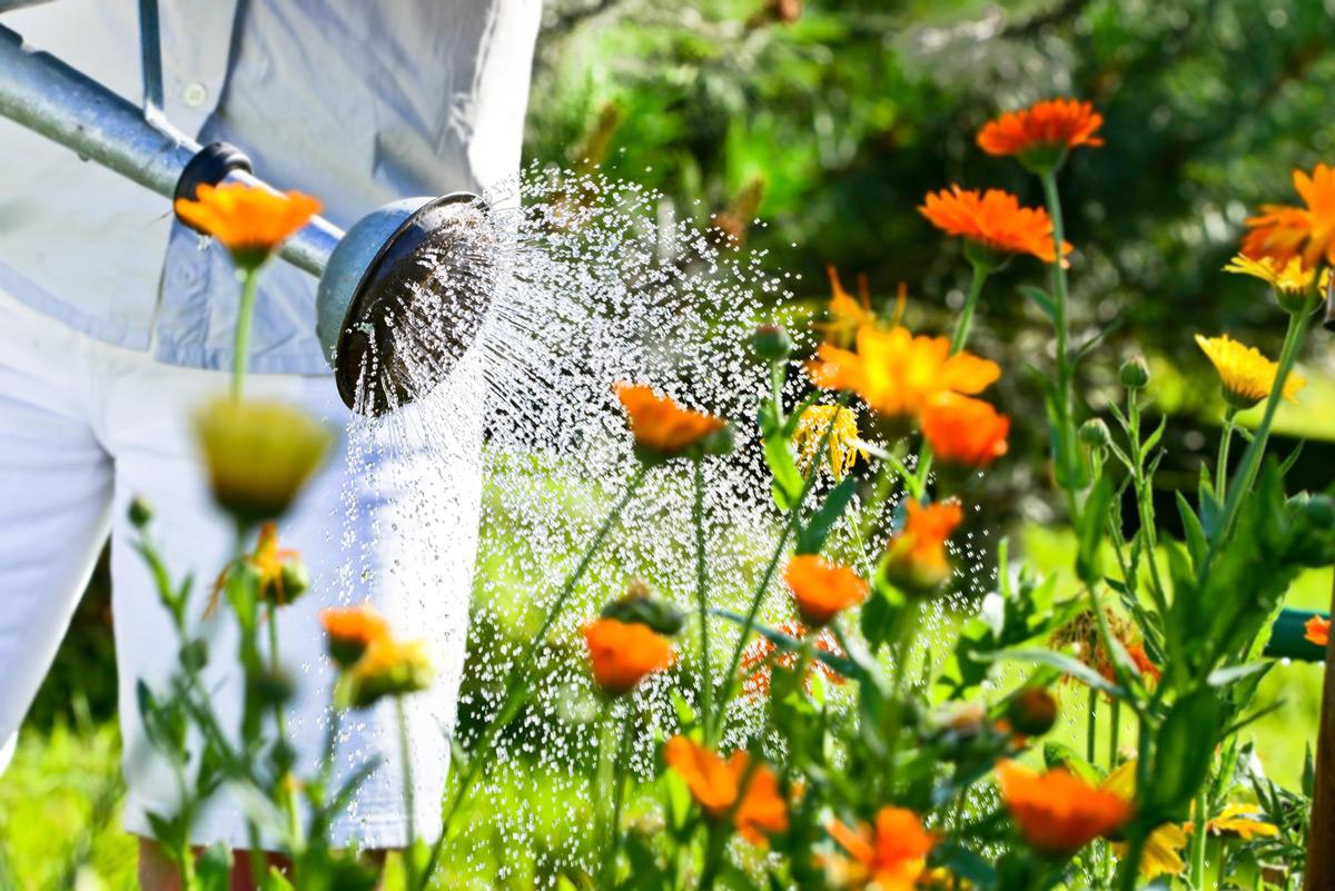 Garten im Juli: Genießen und Gießen!