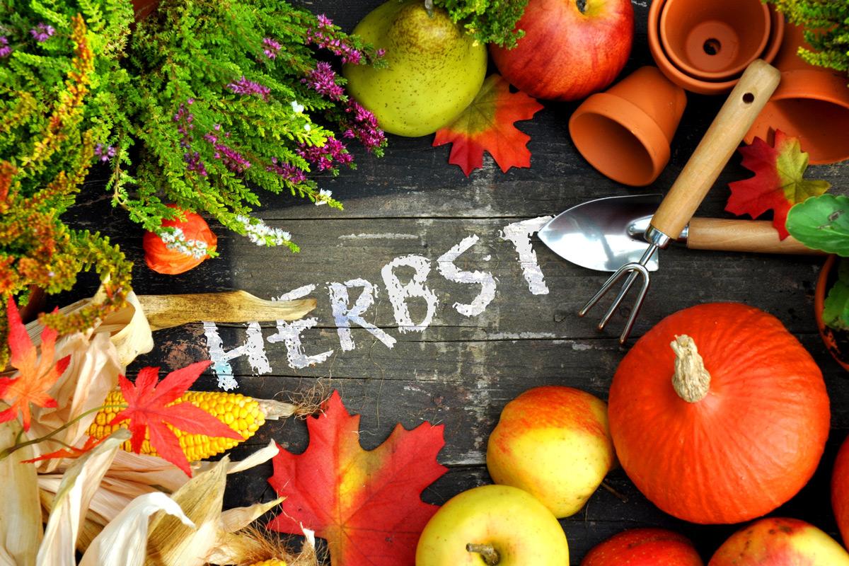 Nach der Saison ist vor der Saison – Tipps für die Gartenarbeit im Herbst