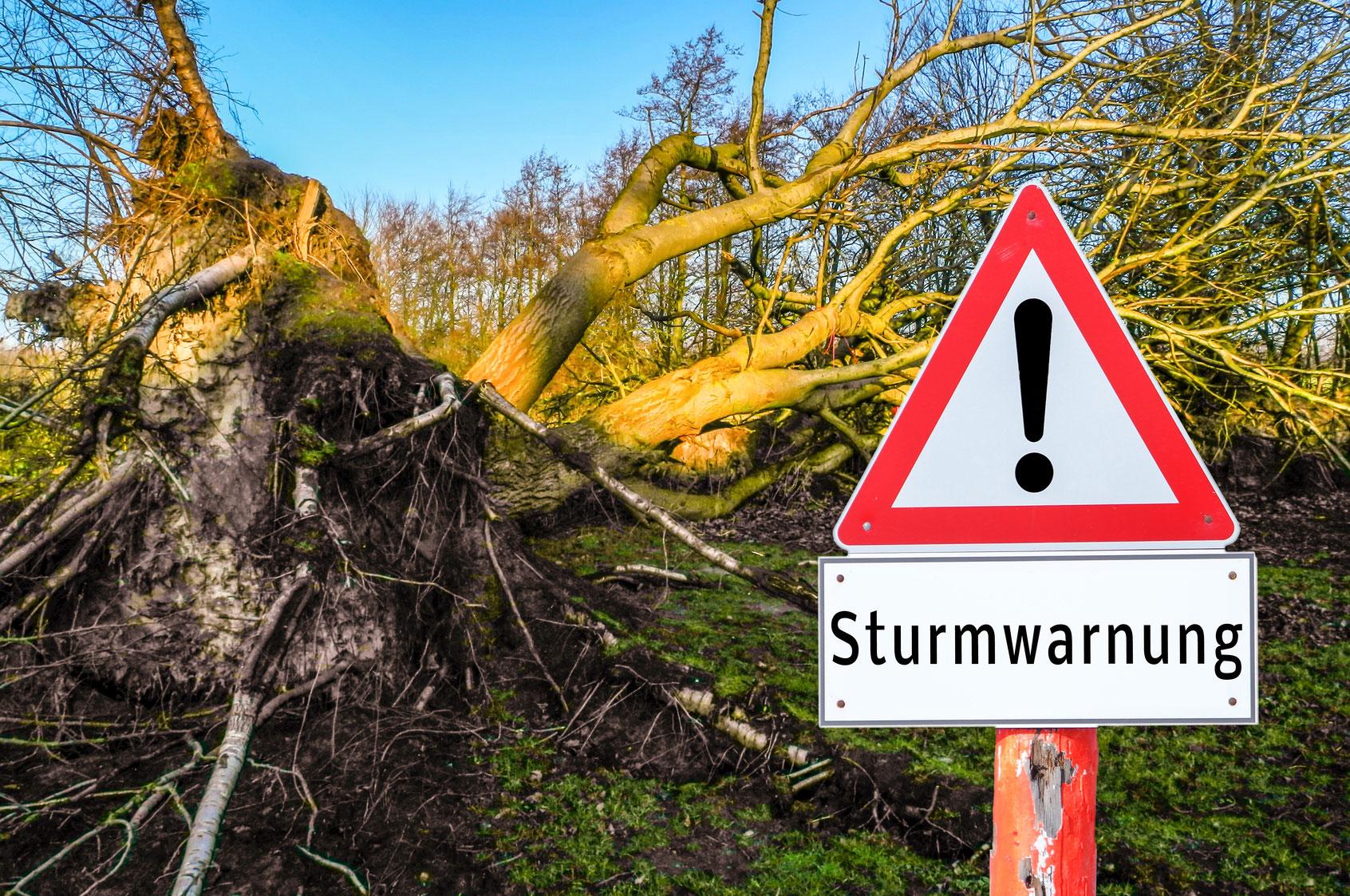 Gerichtsurteil über die Standsicherheit von Bäumen im Garten