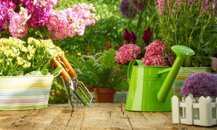 Haus und Garten: der Sommer hält Einzug