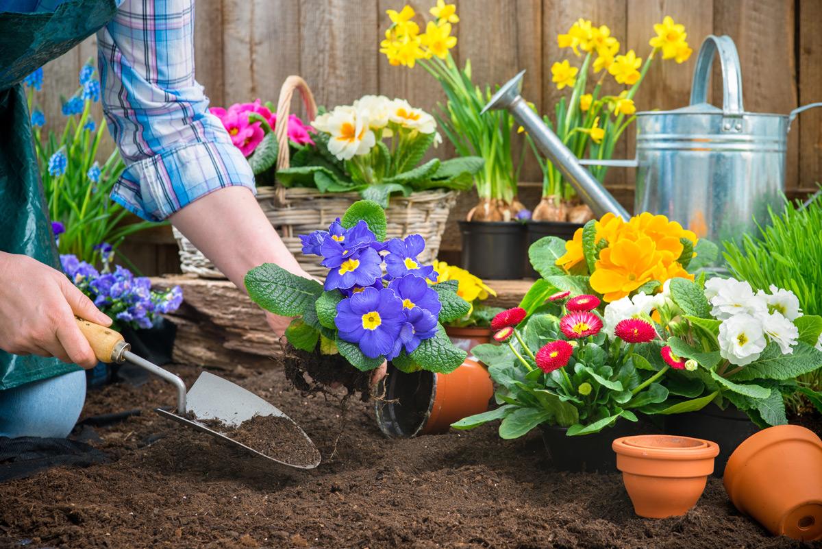 Der Frühling ist da: Gartenarbeiten im März