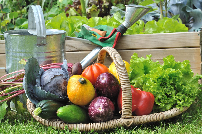 Gartentipps für August: Erntezeit!