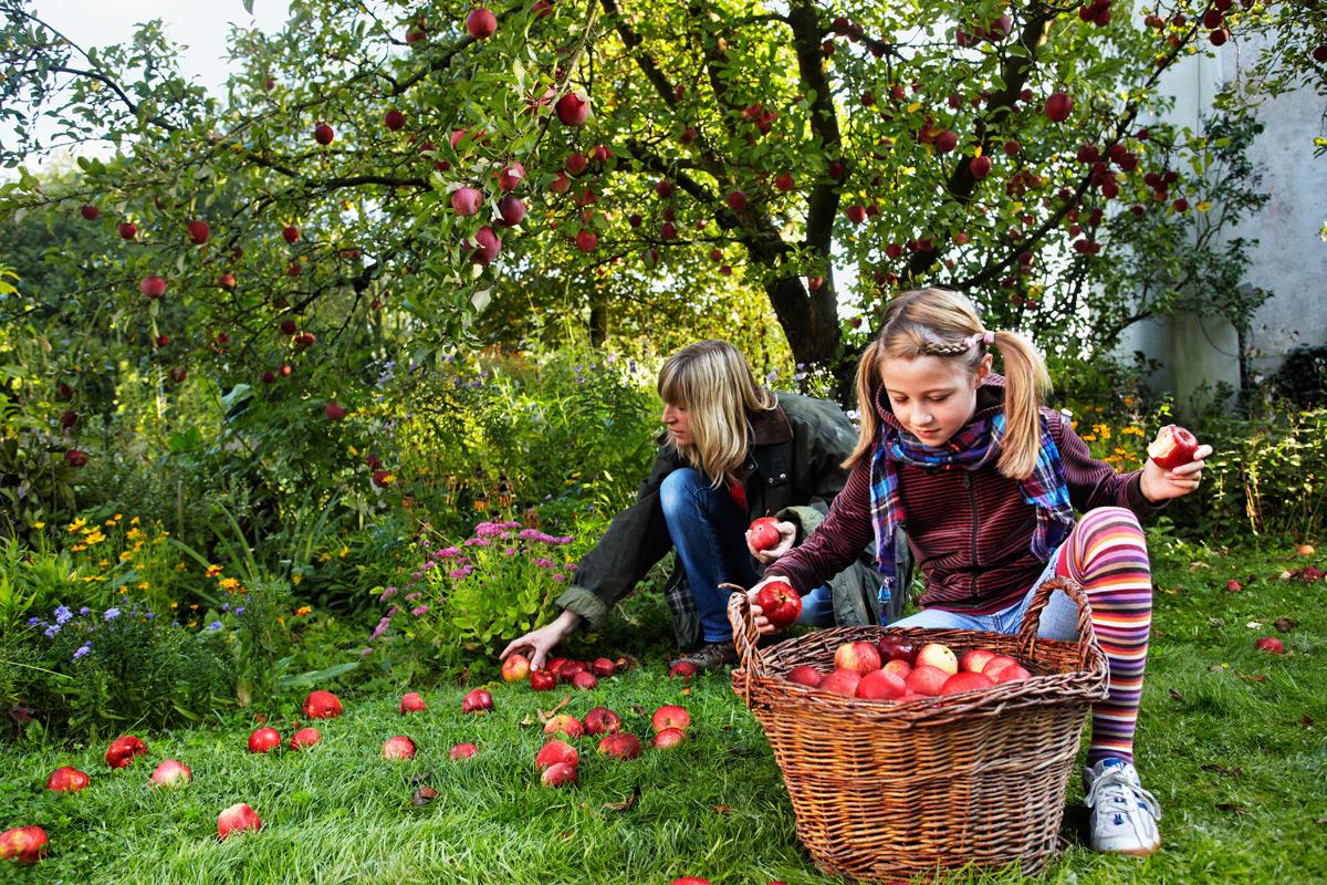 Gartentipps für September