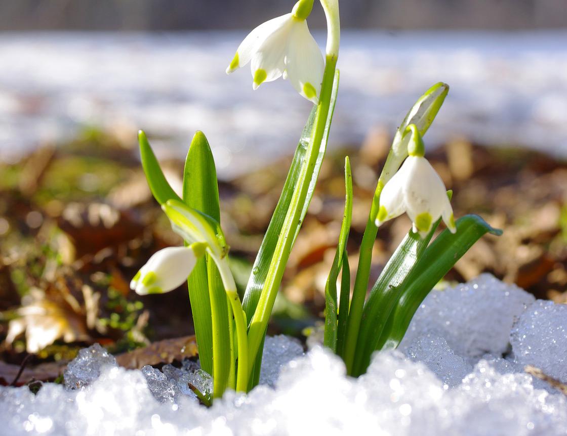 Gartentipps – So starten Sie gut vorbereitet in die neue Saison