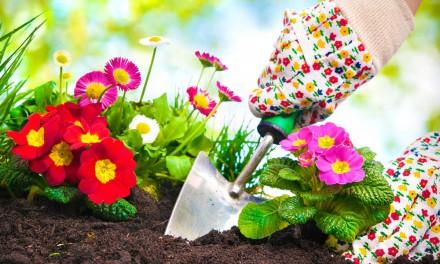 Haus und Garten: Mit dem Frühling startet die neue Gartensaison