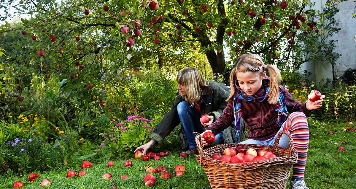 Haus und Garten: der Herbst als Vorbereitung für den Winter